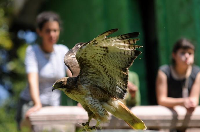 aves en macuiltepetl