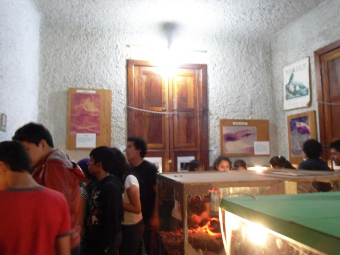 museo de la fauna macuiltepetl