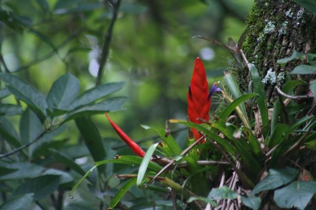 Foto: Tencho, Thillandsia multicaulis