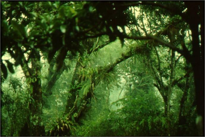 bosque macuiltépetl